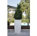 Samozavlažovací kvetináč plastový Lafiora 31 x 31 x 57 cm biely lesklý