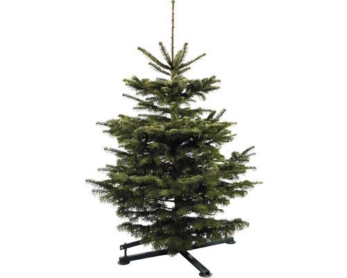 Živý vianočný stromček jedľa dánska Nordmann Gold 110-150 cm
