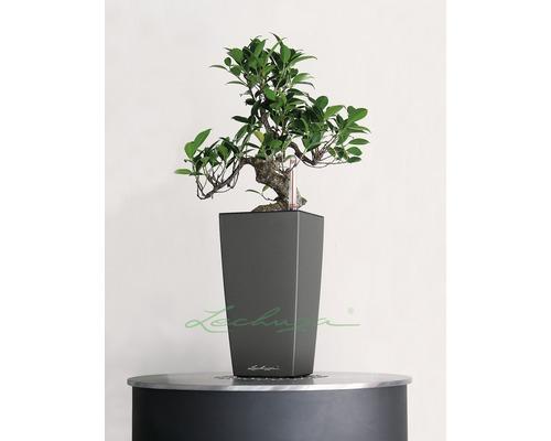 Plastový samozavlažovací kvetináč Lechuza Maxi Cubi 14x14x26 cm antracit