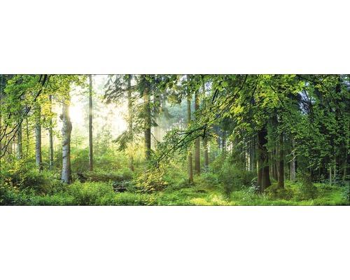 Sklenený obraz Forest Harmony I 80x30 cm
