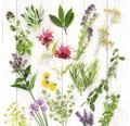 Sklenený obraz Herbs & Flowers 20x20 cm