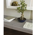 Samolepiaca fólia d-c-fix® Sheffield drevodekor dub 45x200 cm