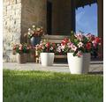 Samozavlažovací kvetináč Lechuza Classico Color biely Ø 28 v. 26 cm