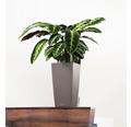 Samozavlažovací kvetináč Lechuza Cubico Color hnedý 22x22x41 cm