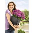 Samozavlažovací kvetináč Lechuza Cubico Color bridlica 30x30x56 cm