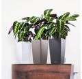 Samozavlažovací kvetináč Lechuza Cubico Color bridlica 22x22x41 cm