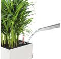 Samozavlažovací kvetináč Lechuza Cubico Color hnedý 40x40x75 cm