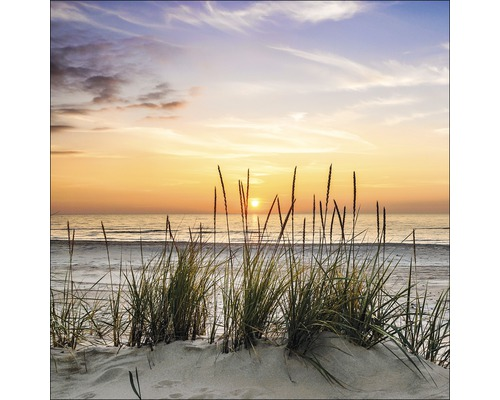 Sklenený obraz Lonely Dune 50x50 cm