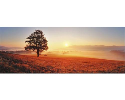 Sklenený obraz Lonely Tree 50x125 cm