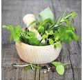 Sklenený obraz Green Basil In Bowl I 20x20 cm